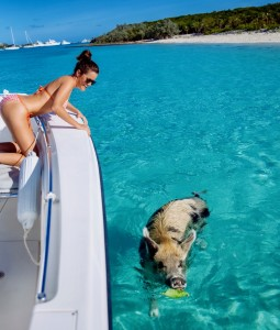 Swimming-Pigs-Bahamas-3